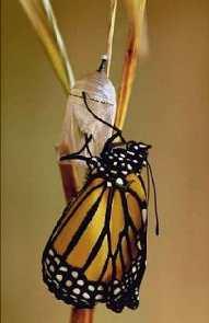 Lectia fluturelui